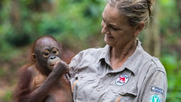Orangotangos bebês aprendendo a subir em árvores